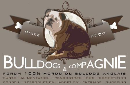 Forum Bulldog & Cie